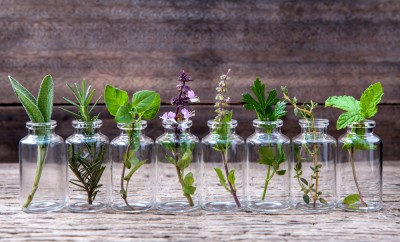 Bottle of essential oil with herbs holy basil flower, basil flower,rosemary,oregano, sage,parsley ,thyme and mint set up on old wooden background