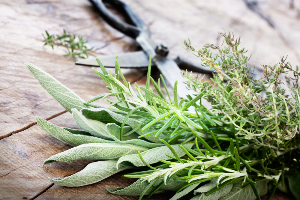 Freshly harvested herbs with old antique scissors on wood background. Fresh sage, thyme, mint and rosemary leaves